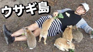 うさぎ島でウサギに埋もれてみた!廃墟にもウサギが!?