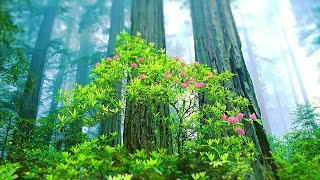 Relaxing Music for Stress Relief. Calming Music for Meditation, Healing Therapy, Spa, Sleep - YouTube
