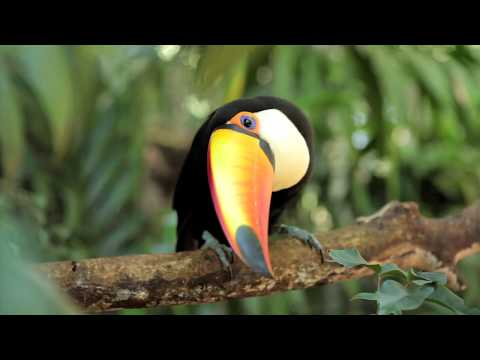 Discover the Amazon with Fred. Olsen