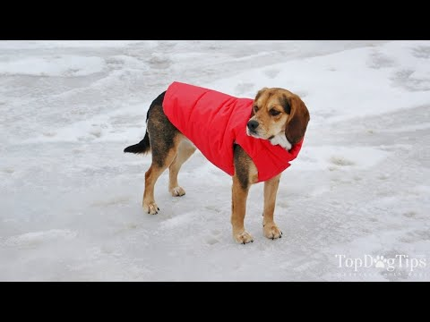 How To Make Dog Clothes