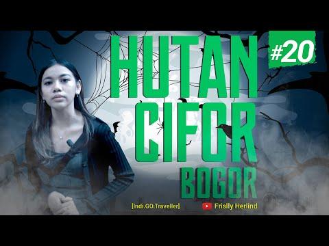 Hutan Cifor Bogor [Indi.GO.Traveller]