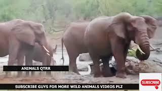Angry Elephant Attack Fight! Tiger, Lion, hyena, Rhino, Hippo, Wild Dogs Crazy Elephant Attacks