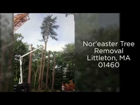 Tree Removal & Tree Pruning 01460