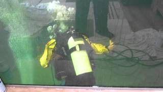 SCUBA diving in koi pond to fix bottom drain air lines
