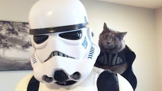 My Cat Hired A Stormtrooper