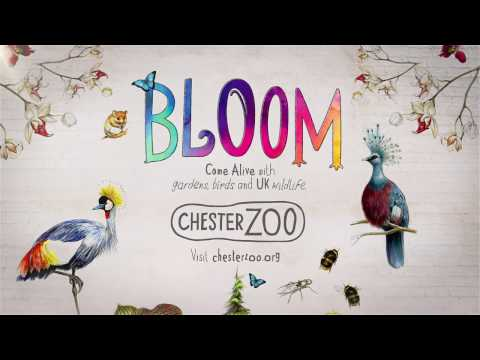 Bloom - Chester Zoo