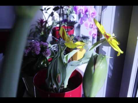 Spring flower timelapse