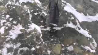 Pas se zatrčao u more i počeo panično lajati - Kada je vlasnik shvatio zašto, odmah je pritrčao