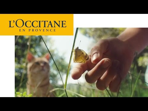 Our most incredible tools, our hands | L'Occitane