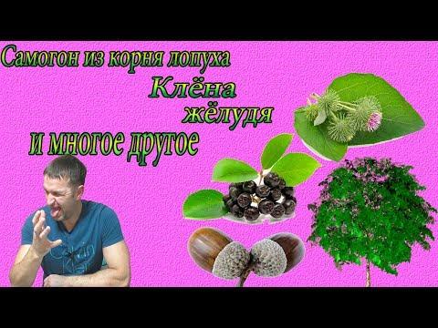 Самогон из лопуха,желудя,сока клена,и черноплодки  Дегустация photo