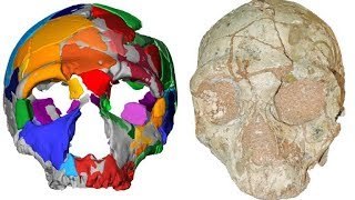 Científicos identifican en Grecia los fósiles de 'Homo sapiens' más antiguos fuera de África
