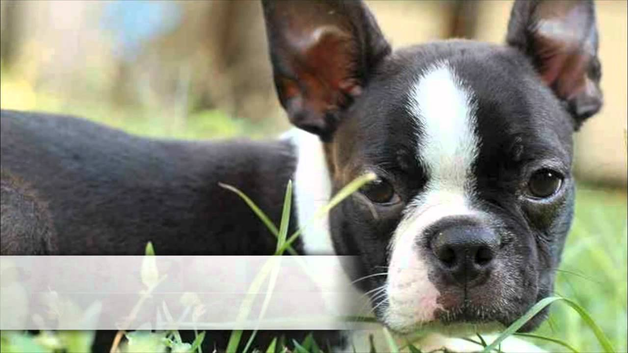 Top 10 Non Shedding Dogs Youtube