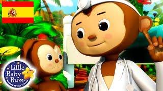 Canciones Infantiles   Cinco Monitos   Dibujos Animados   Little Baby Bum en Español
