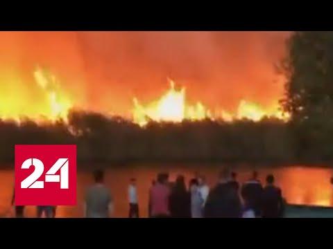 Пожары в Воронежской области: помощи ждут из Тулы и Липецка