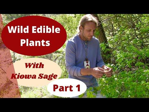 Edible and Medicinal Plants with Kiowa Sage (Part 1)