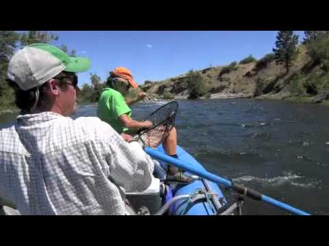 Fish Wrangling on the Stillwater River, Montana with Bella Treks