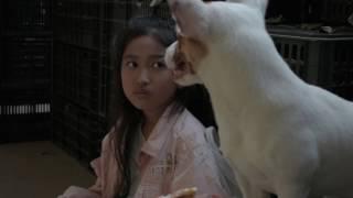 """Phim Ngắn """"Tình Bạn"""" - Cô Bé và Chú Chó Nhỏ"""