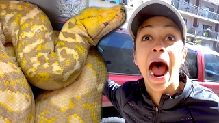 LIZA FOUND THIS LIVING IN HER CAR!!