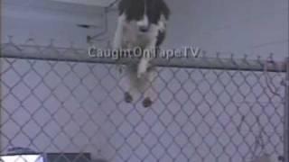 Kada su pogledali snimak, niko nije mogao da veruje šta je pas uradio! Neverovatno!