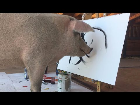 Painting Pig Saved From Slaughterhouse Has Own Exhibition