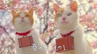 にゃらん51