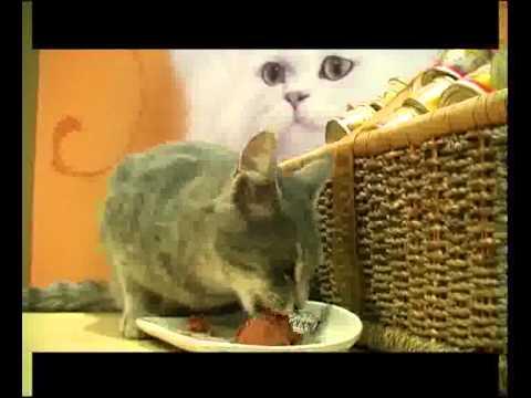 Zlatna maca - Dodela nagrade