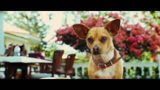 Le chihuahua de beverly hills :  bande-annonce VO