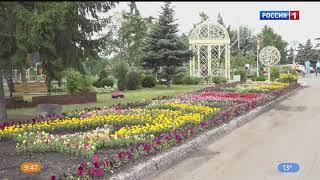 Омские уже высадили более полумиллиона цветов