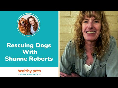 Rescuing Dogs With Shanne Roberts