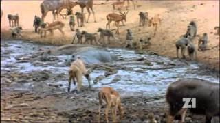 Planéta Zem zhora - 3 - Chrániť vodu znamená chrániť život 1