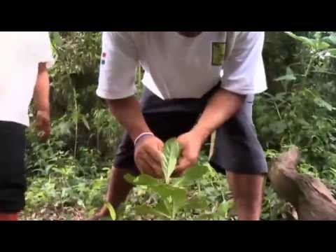Baixar Soja raubt den Aché in Paraguay die Heimat | Global 3000