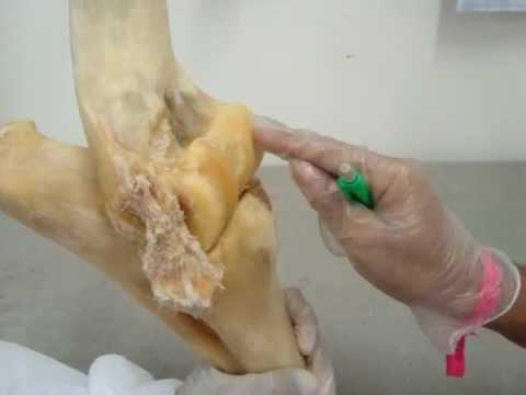 Baixar articulação do cotovelo
