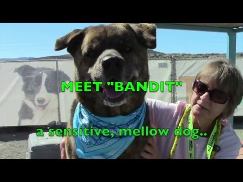 Bandit..will steal your heart!  ADOPTED!