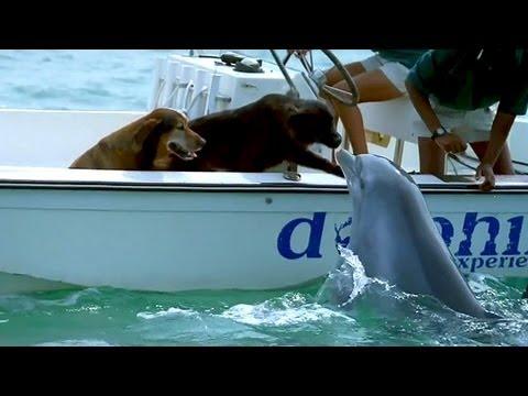 Delfin i pas