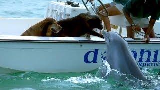 Delfin je primjetio psa na čamcu. Izronio je iz vode i uradio nešto predivno!