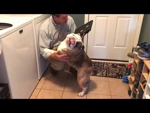 Reuben the Bulldog: Homecoming Committee