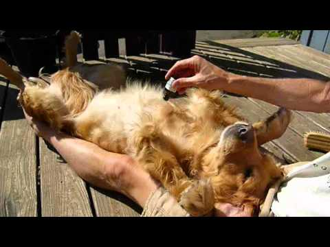 Natural Flea And Tick Repellent For Dogs Amp Cats Youtube
