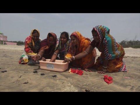 تكاثر السلاحف الزيتونية في الهند مهدد