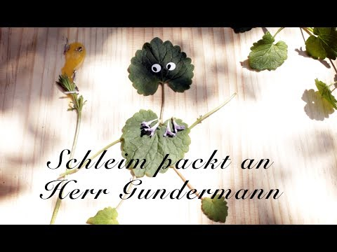 Viriditas Heilpflanzen-Video: Schleim packt an Herr Gundermann