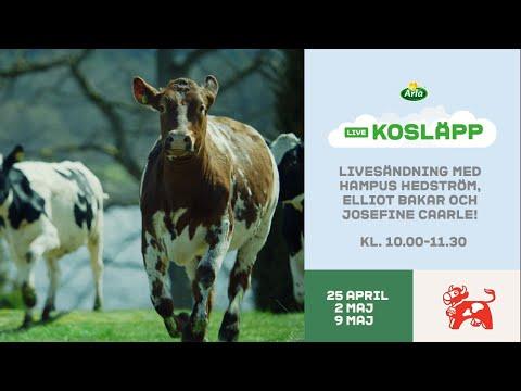 Arla Kosläpp LIVE - Lördag 9 maj 2020