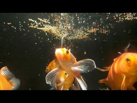 How much often should you feed fish aquarium care for How often should you clean a fish tank