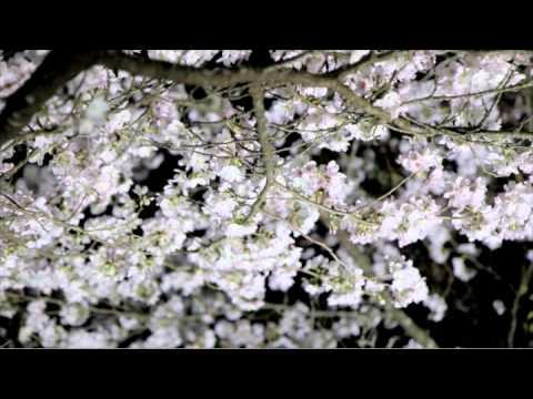 佐賀・鍋島藩ゆかりの「国登録記念物 御船山楽園」で九州最大の桜のライトアップを開催