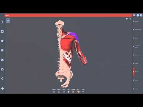 Primal Pictures 3D Human Anatomy Package