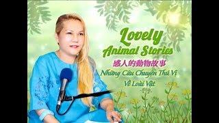 991 Lovely Animal Stories (清海無上師)