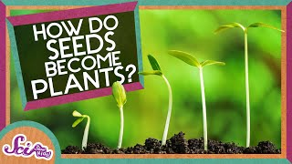 How Does A Seed Become A Plant?