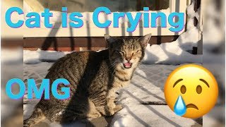 EP #5 Trying to Save Frozen Cat . It's Just sad , I hope It's not too late , Saving Cat's Live