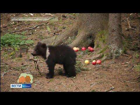Медведица Пужа растет и развивается в центре спасения медвежат-сирот