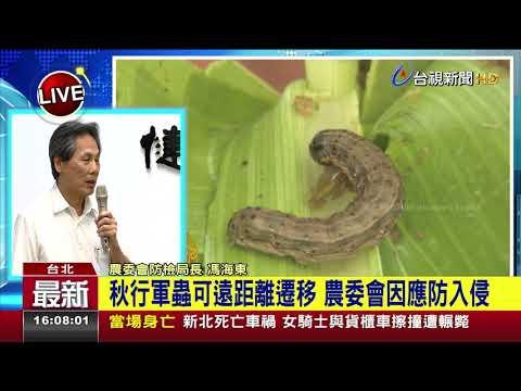 """非洲豬瘟未解 中國""""秋行軍蟲""""肆虐11省份"""
