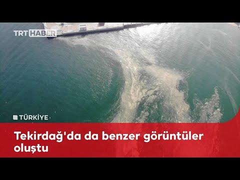 Marmara'da 'deniz salyası' istilası