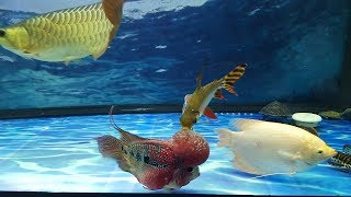 Khám phá bể cá cảnh  với những loài cá cảnh tuyệt đẹp